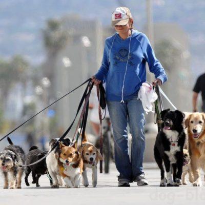 аргументы в защиту собак
