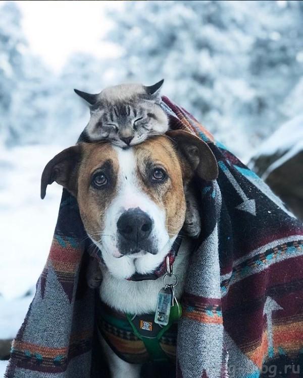 кот и пёс путешествуют в горах