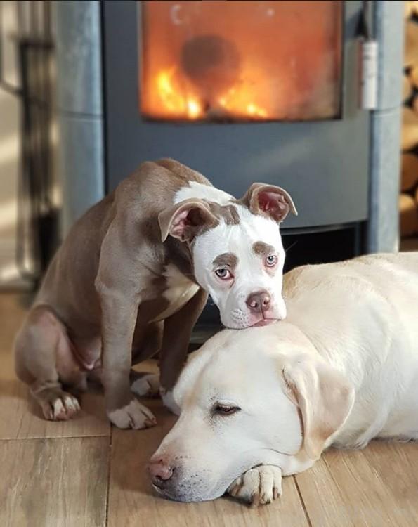 самый грустный пес