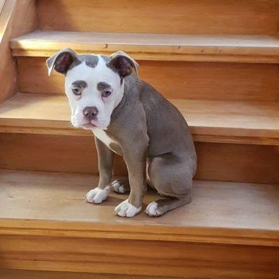 очень печальная собака
