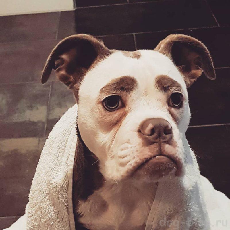 самый грустный щенок
