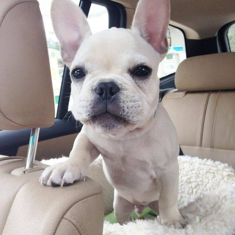письмо щенка будущим хозяевам