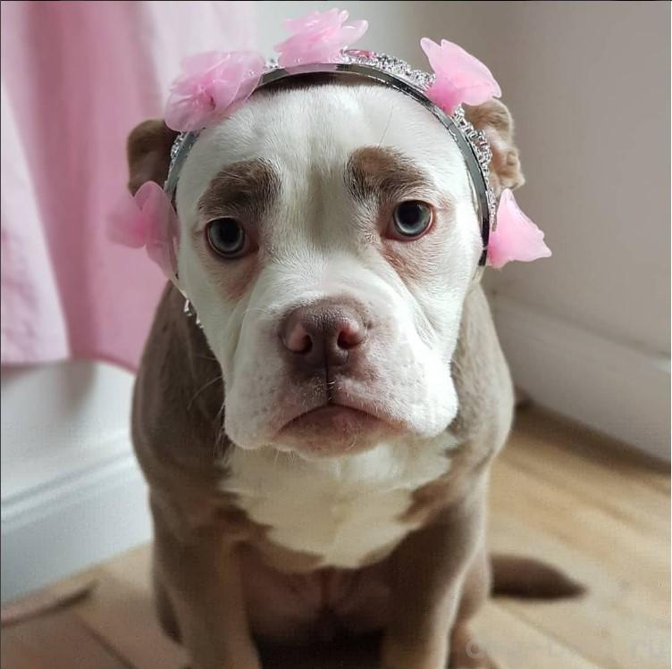 очень грустная собака