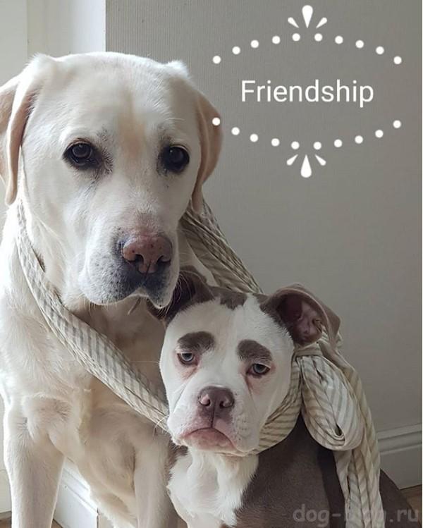 самый печальный щенок в мире