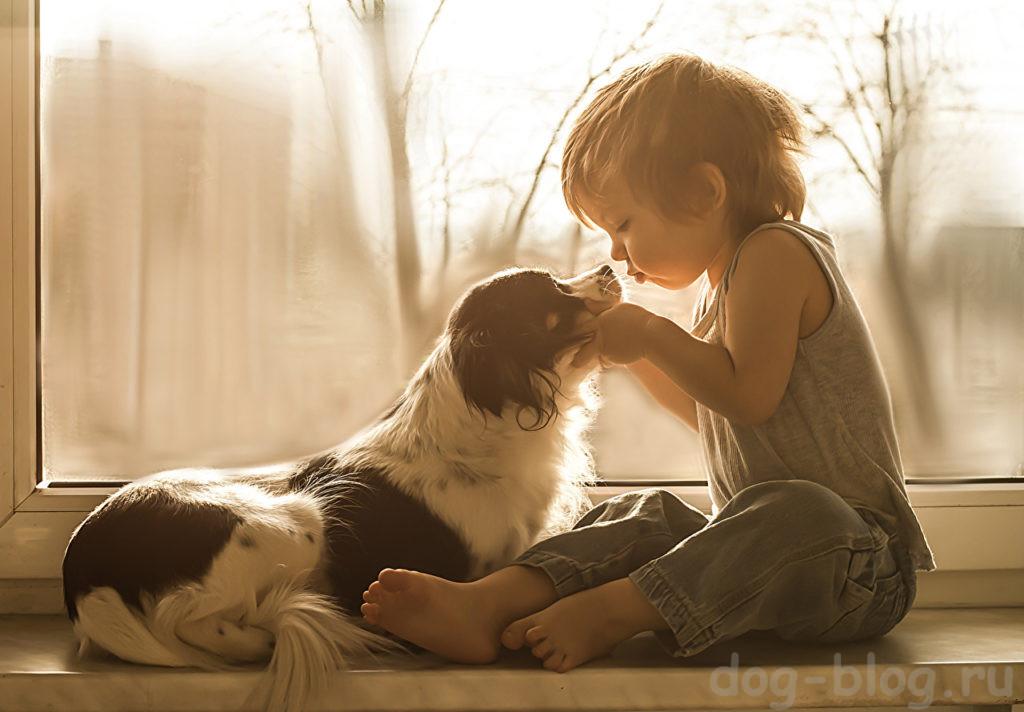 крылатая фраза о сострадании к животным