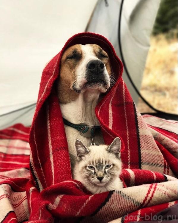 пёс Генри и кот Балу