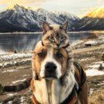 Пёс Генри и кот Балу путешествуют в горах