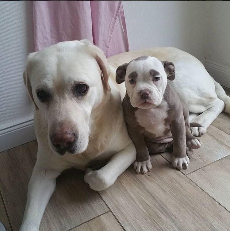 самый печальный щенок