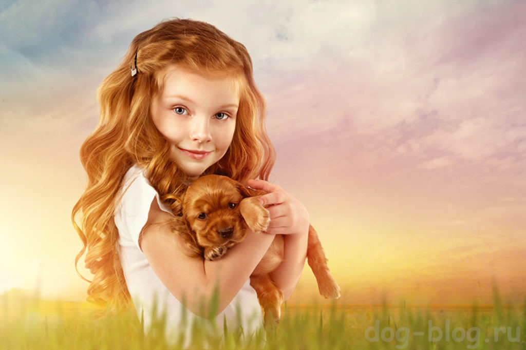 о месте собаки в жизни человека
