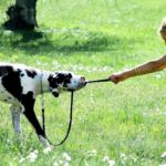Перетяжки с собакой — правила, ошибки и мифы