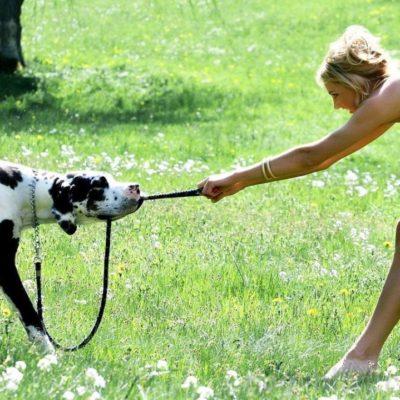 перетягивание с собакой