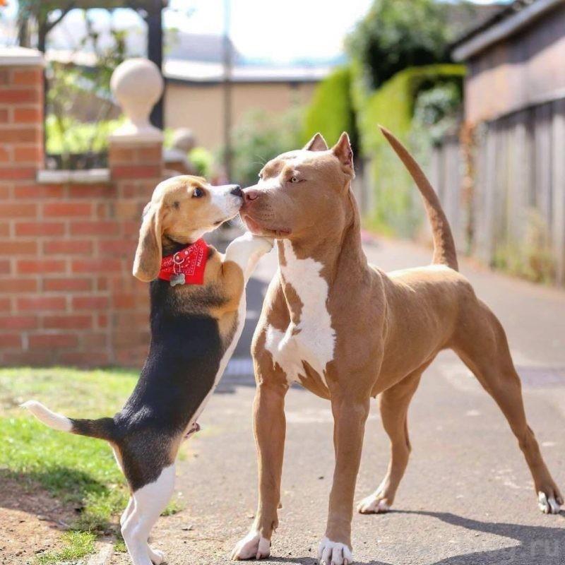 как подружить двух собак