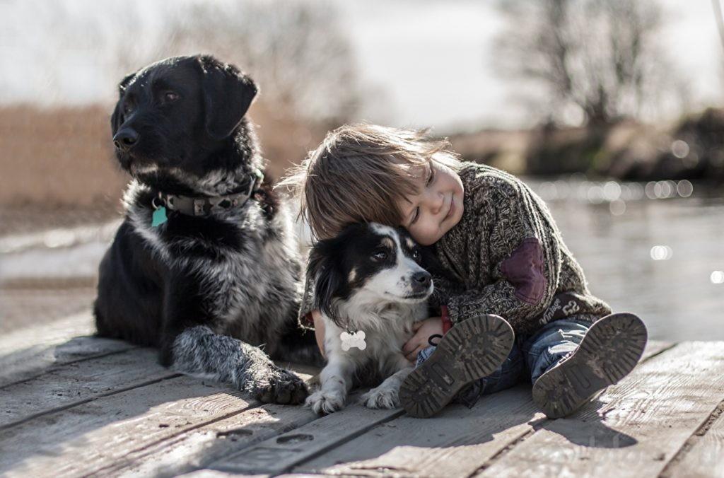 завести вторую собаку