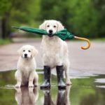 7 причин завести вторую собаку