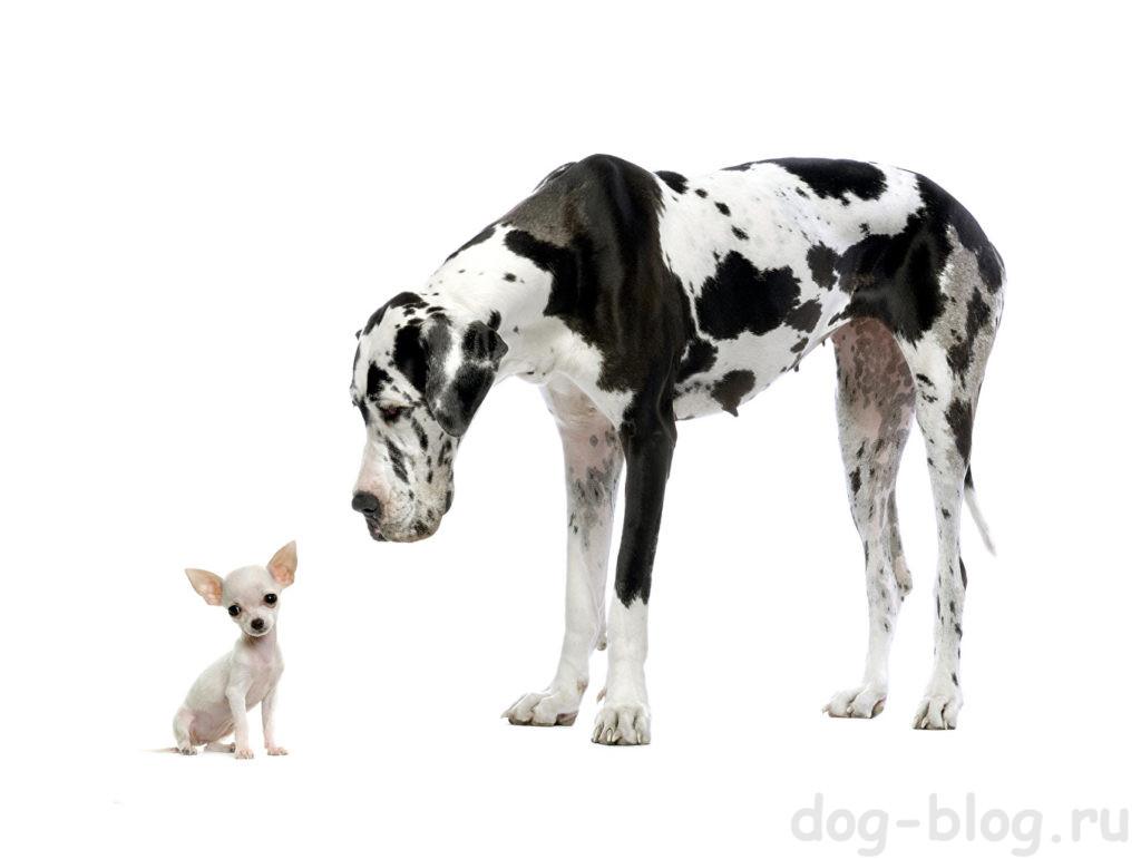 страхи щенка