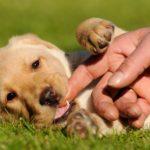 Как отучить щенка кусаться и хватать