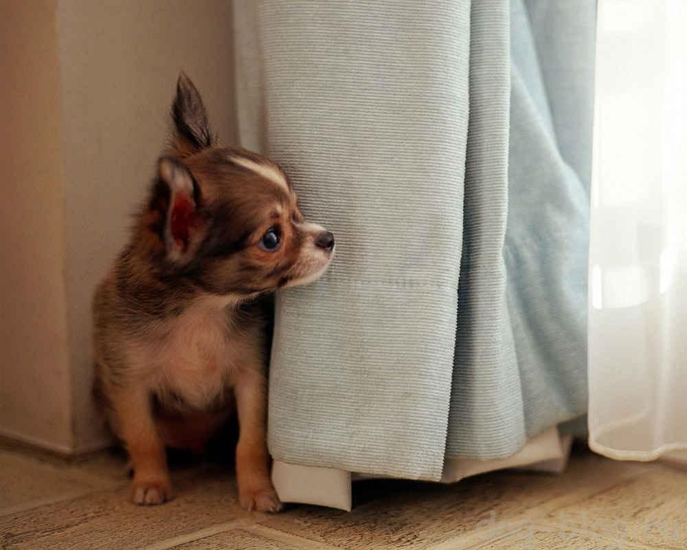 щенок боится
