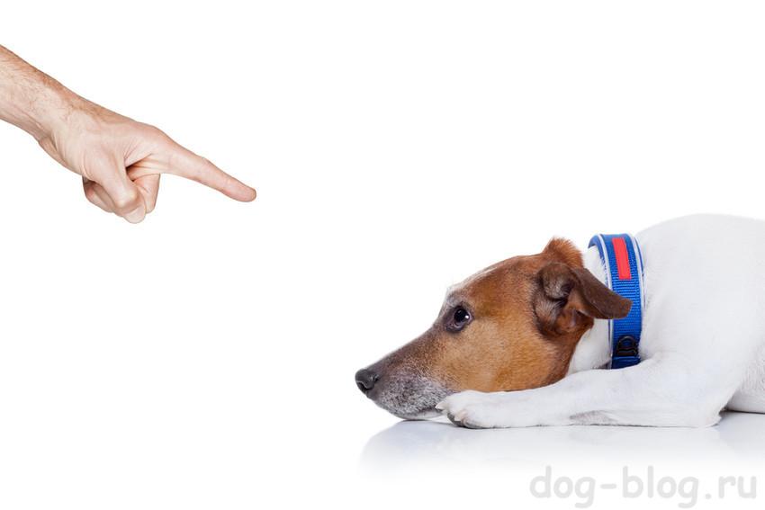 хозяин ругает собаку