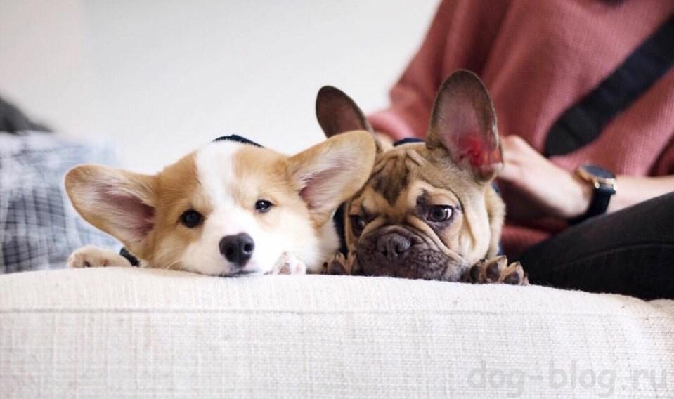 вторая собака в доме