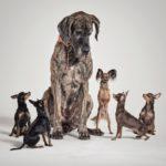 Социализация и страхи щенка