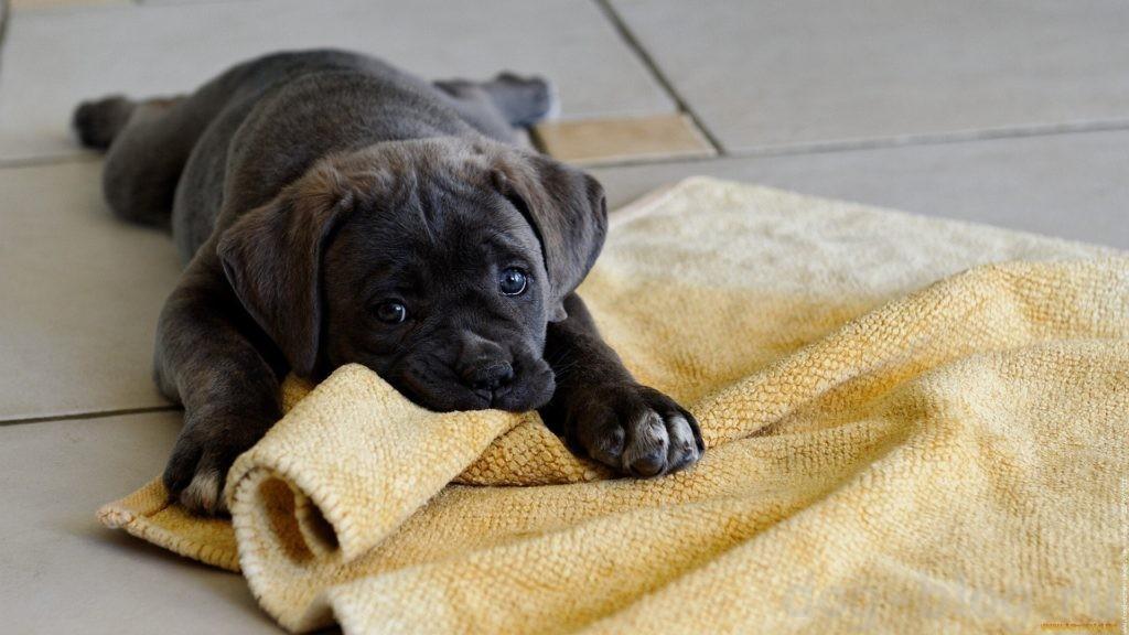почему щенок кусается