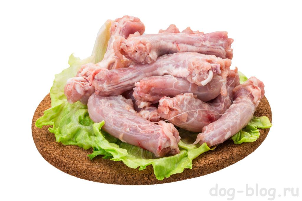 можно давать собаке куриные шеи