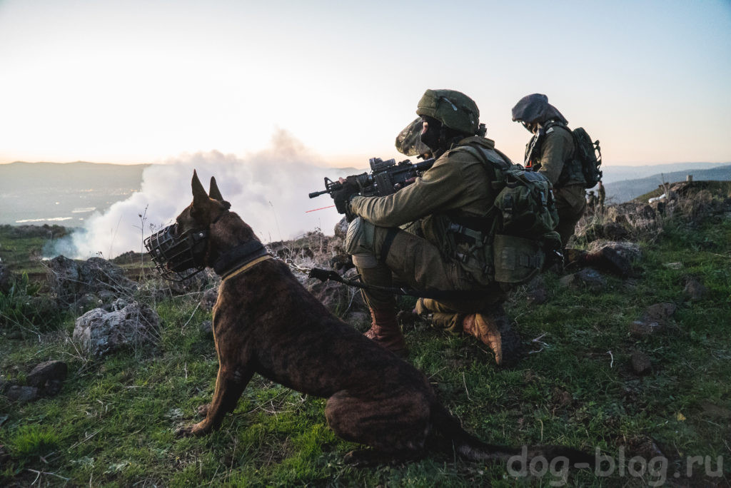 тактические собаки
