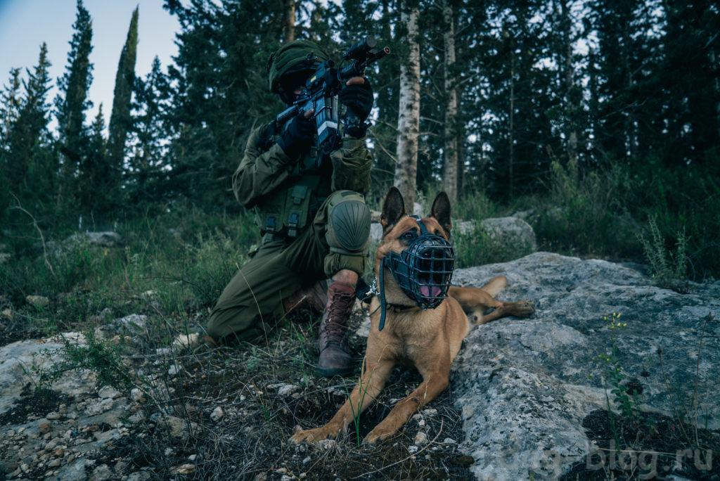 израильские боевые собаки