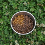 Смена корма у собак