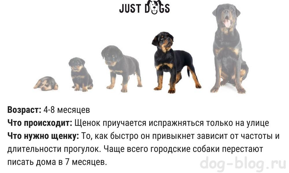развитие щенка по неделям