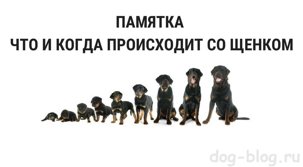 развитие щенка до года
