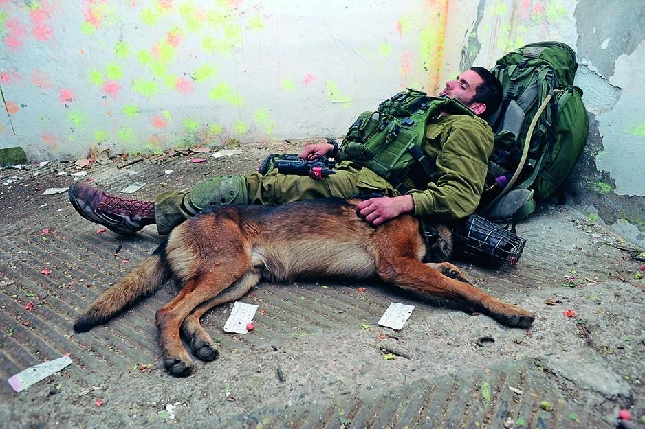 боевые армейские собаки