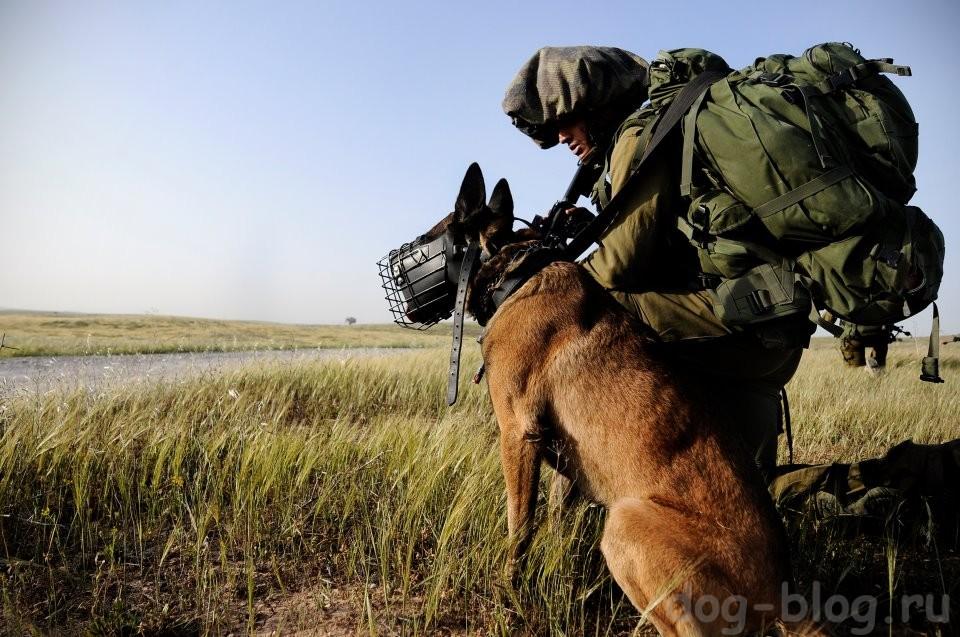 тактическая собака