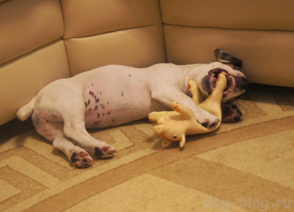 смена зубов у щенка