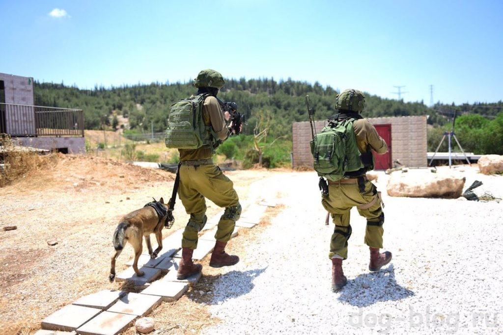 собаки израильской армии