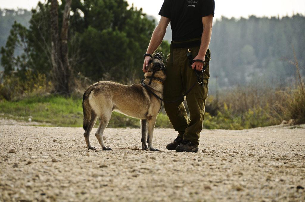 тактические собаки окец