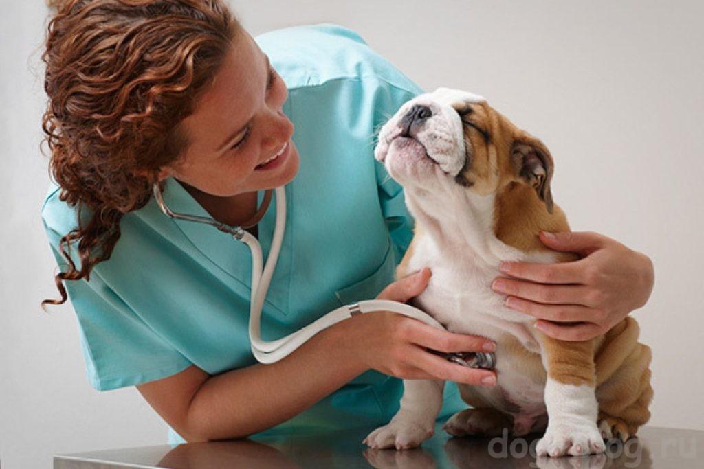 день ветеринара