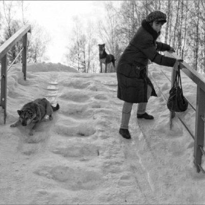 собака на гололёде