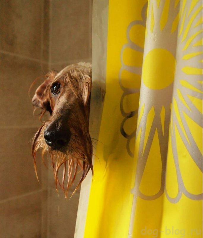история про собаку ветеринара