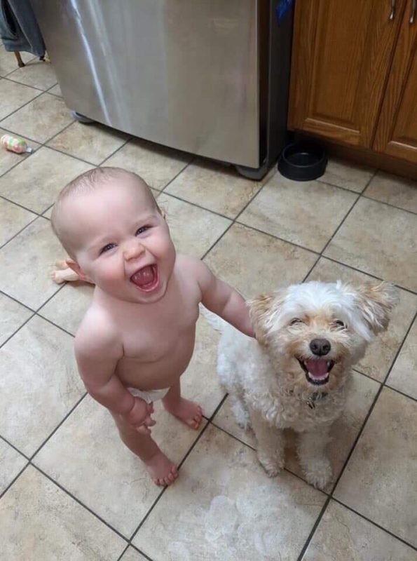собака это счастье