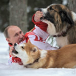 Собаки Путина — фото