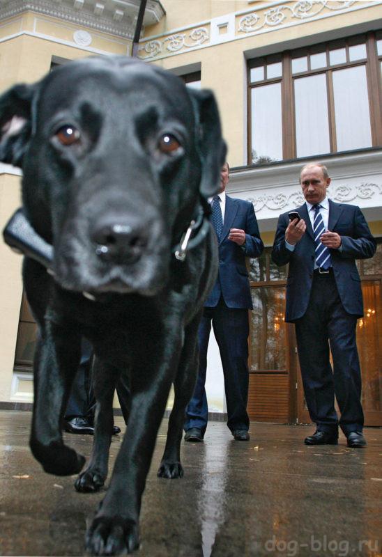 собака Путина
