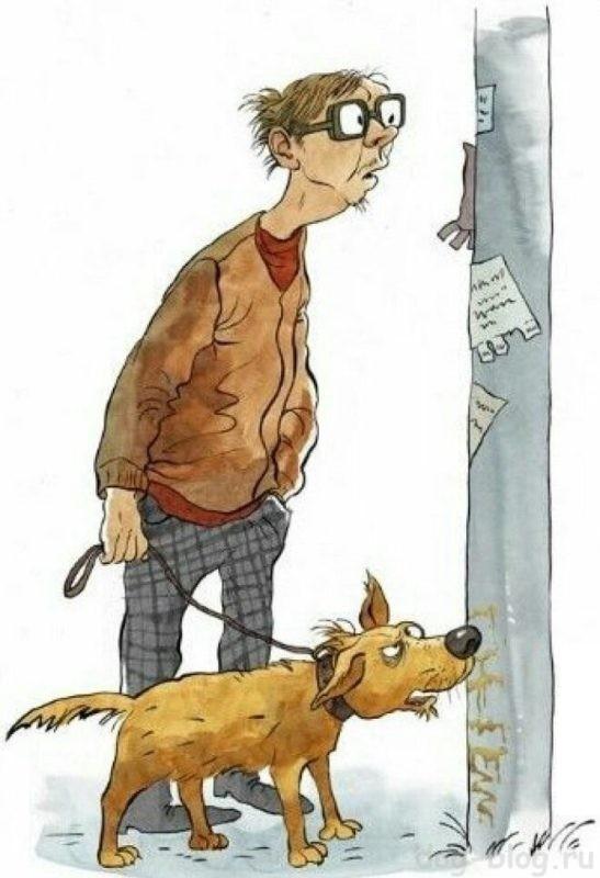 собака писает дома что делать