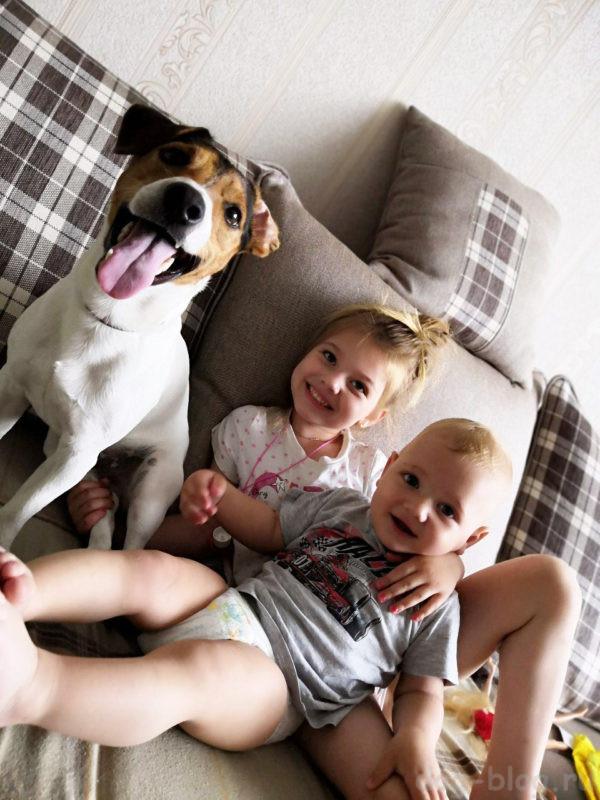 Стоит ли заводить ребёнку собаку