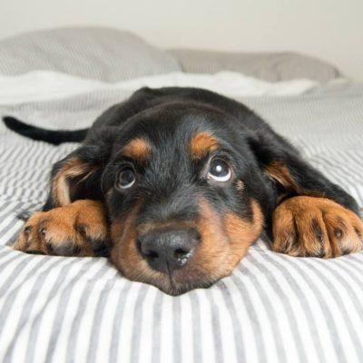 почему собака писает дома