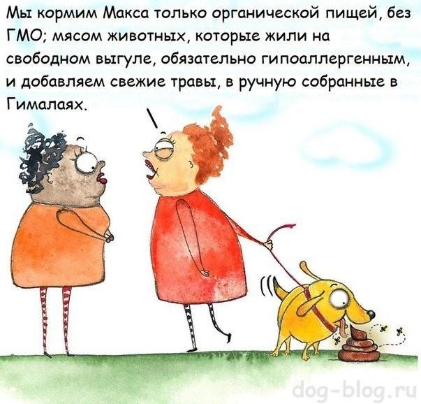 привычки собаки