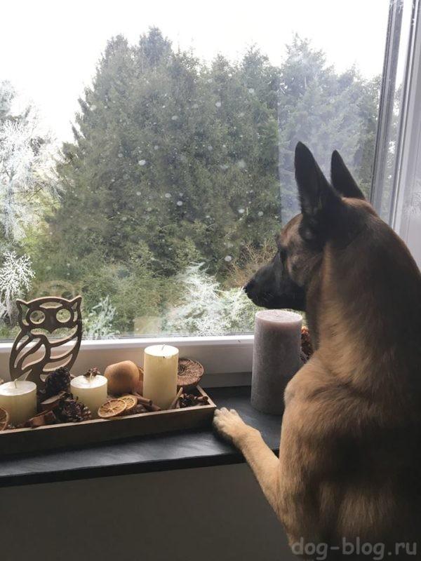 нашли собаку, что делать