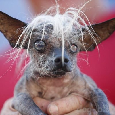очень страшная собака