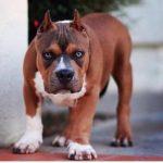 Что делать, если вашу собаку боятся? 15 советов в помощь!