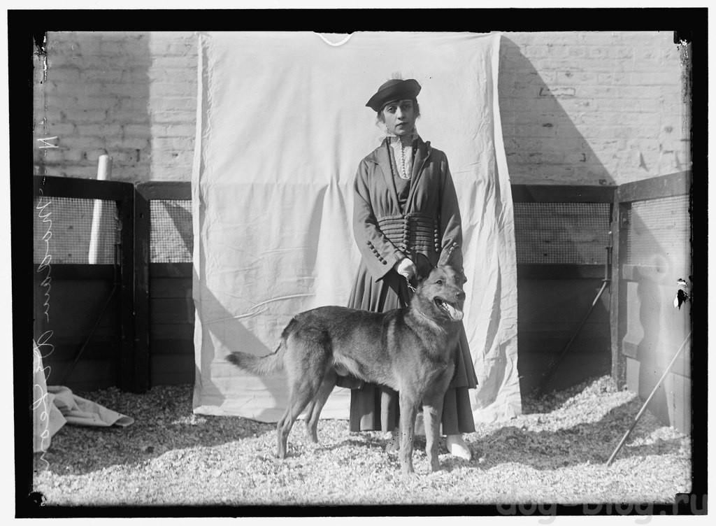 выставка собак 1915 год